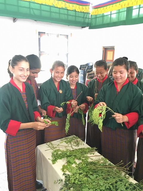 Students preparing moringa tea from leaf