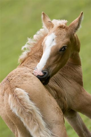 Healthy colt
