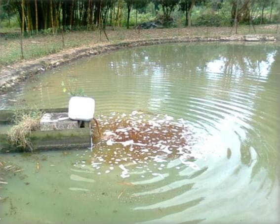 Applying Activated EM・1 into the school oxidation pond