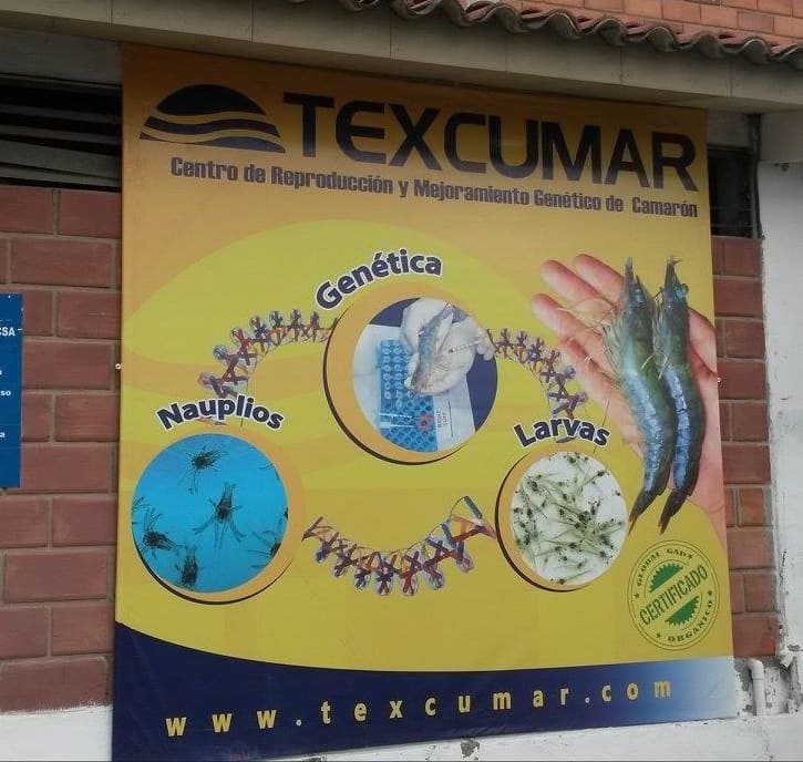 Texcumar shrimp grower company