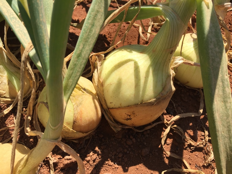 (Photo 5)
