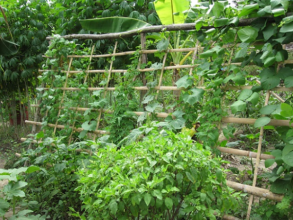 Herbs and vegetables cultivation