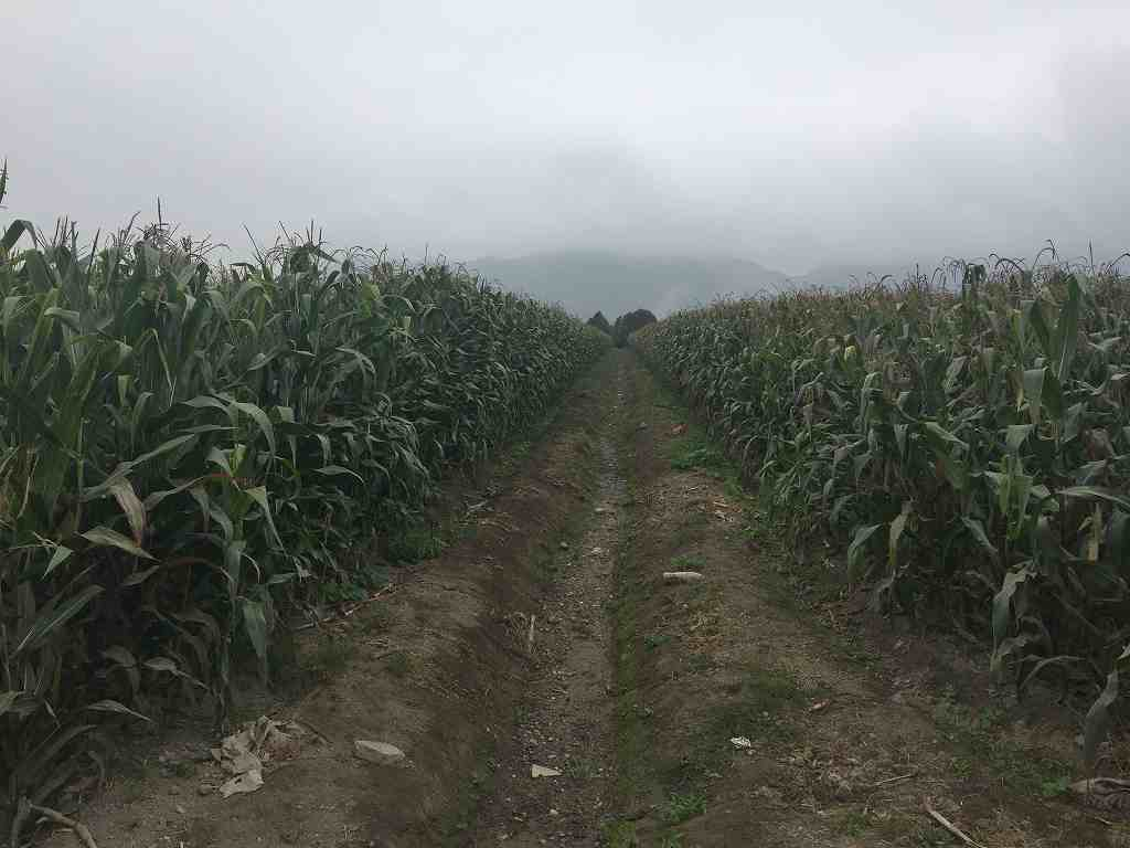 Production of corn for feeding grows as much as conventional neighboring farms