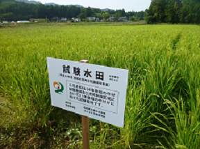 EM application on an experimental paddy field in 2012.