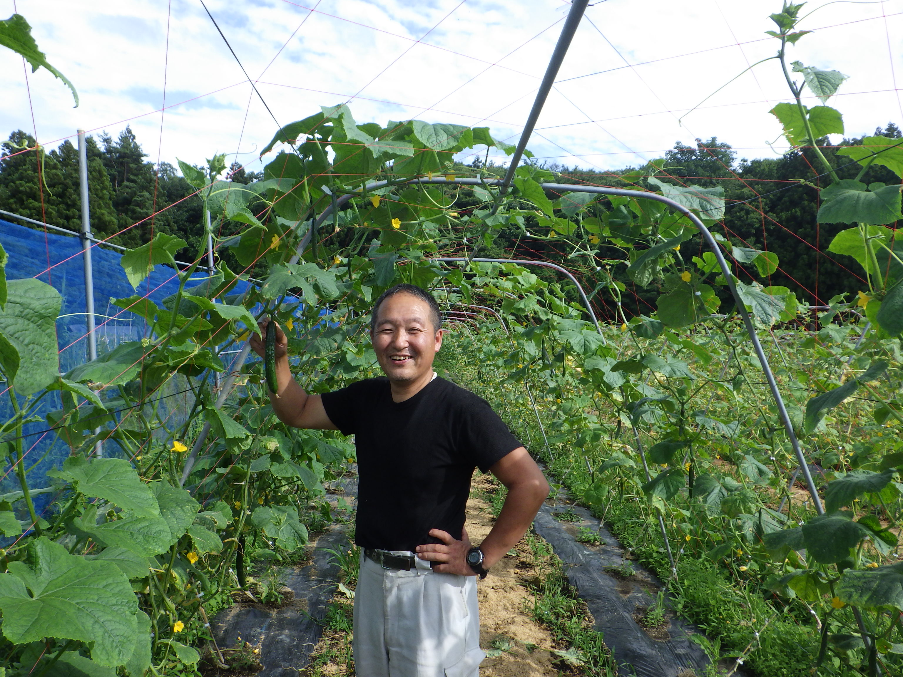 A Cucumber Farm Quickly Recovered After the Nuclear Plant Accident in Fukushima