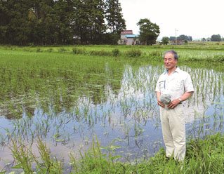What Happened to Rice Paddy Affected by Tohoku Tsunami?
