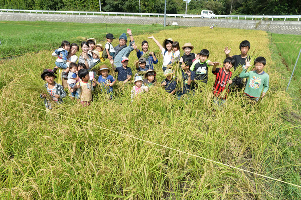 Rice Harvesting Experience at the Shinsen Spark Farm