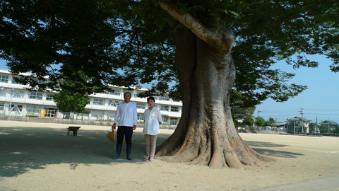 A weakened Zelkova Serrata tree at Unzen Municipal Hijikuro Elementary School garden has been revived by EM