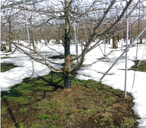 Photo 2 