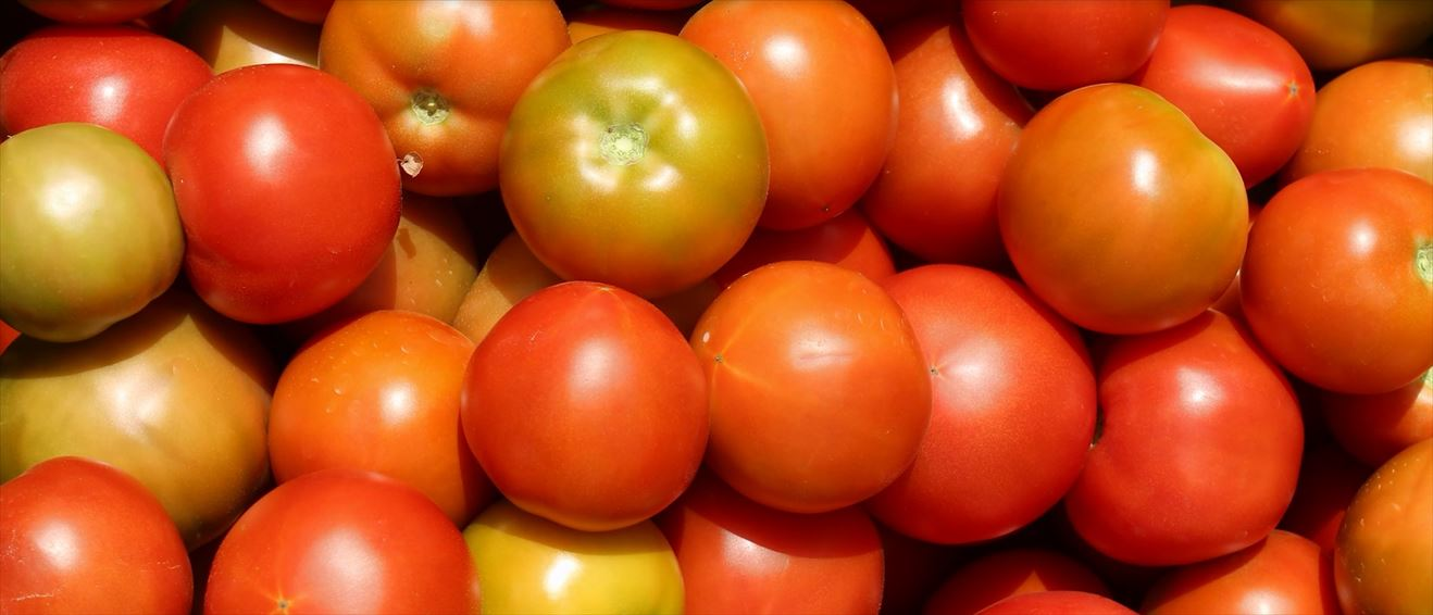 Movie about Tomato Farming in Chile, now available with English subtitles