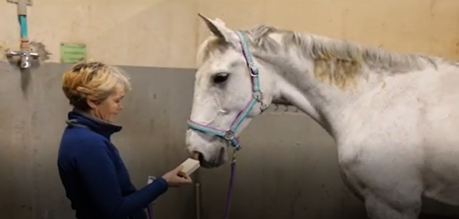 Case Study: Horses regain health with EM